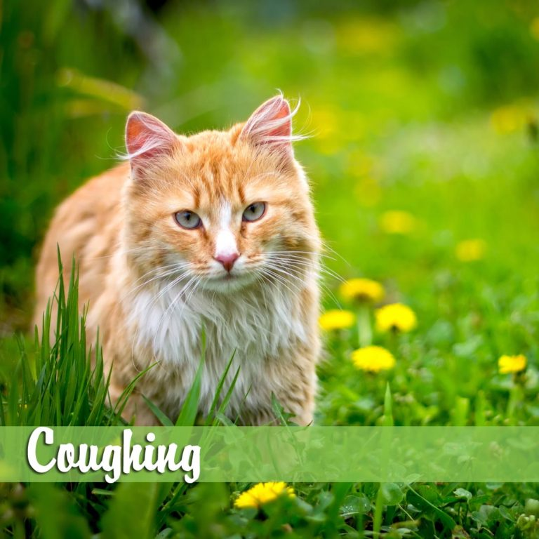 Coughing-MelBch-768x768