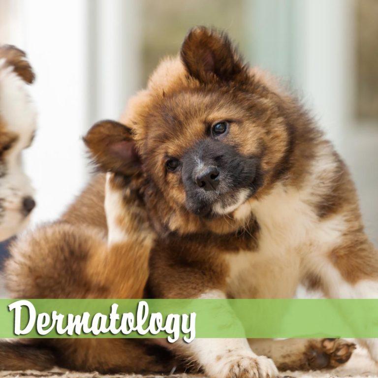 Dermatology-MelBch-768x768
