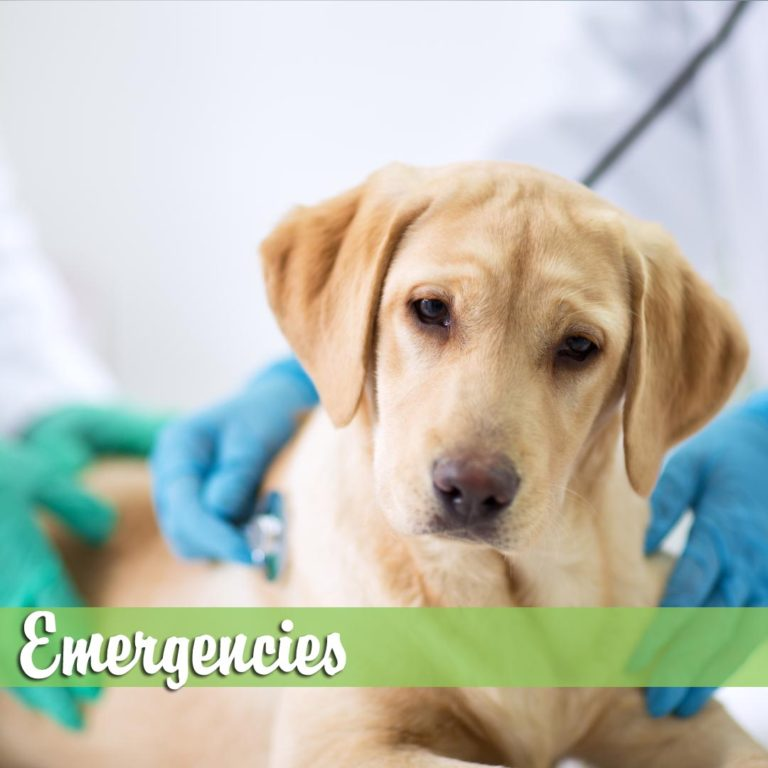 Emergencies-MelBch-768x768