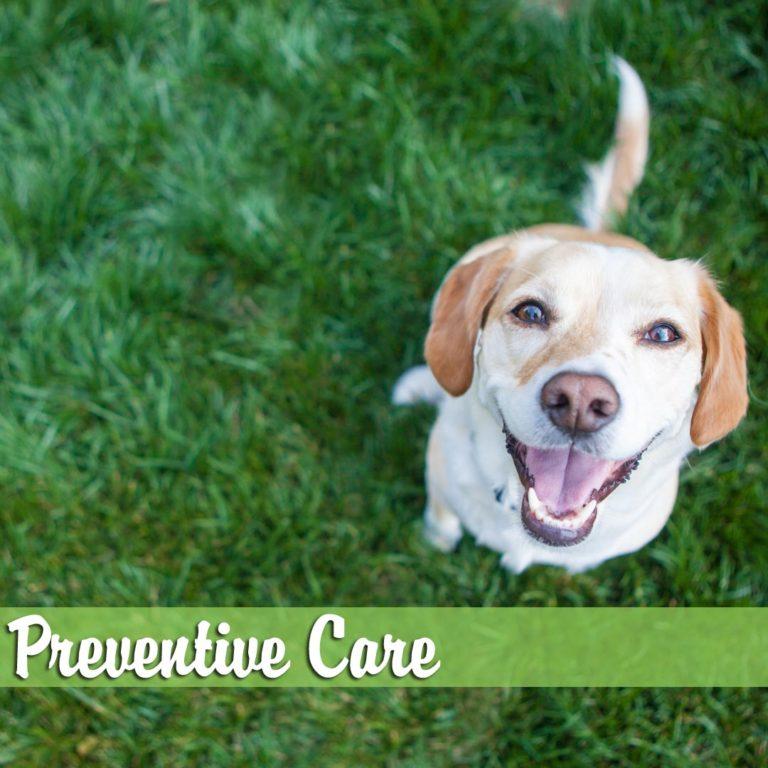 Preventative-Care-MelBch-768x768
