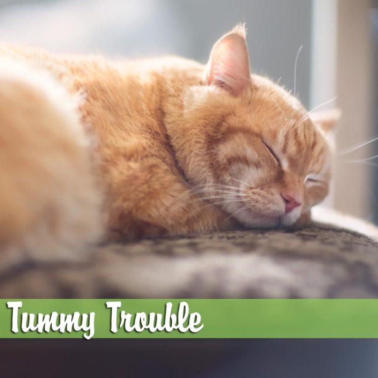 Tummy-Trouble-melBch-768x768