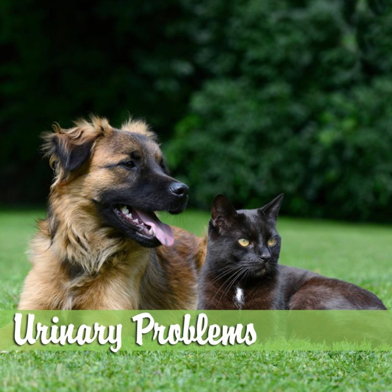 Urinary-ProblemsMelBch-768x768